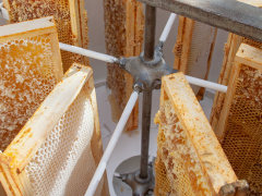 Le travail du miel